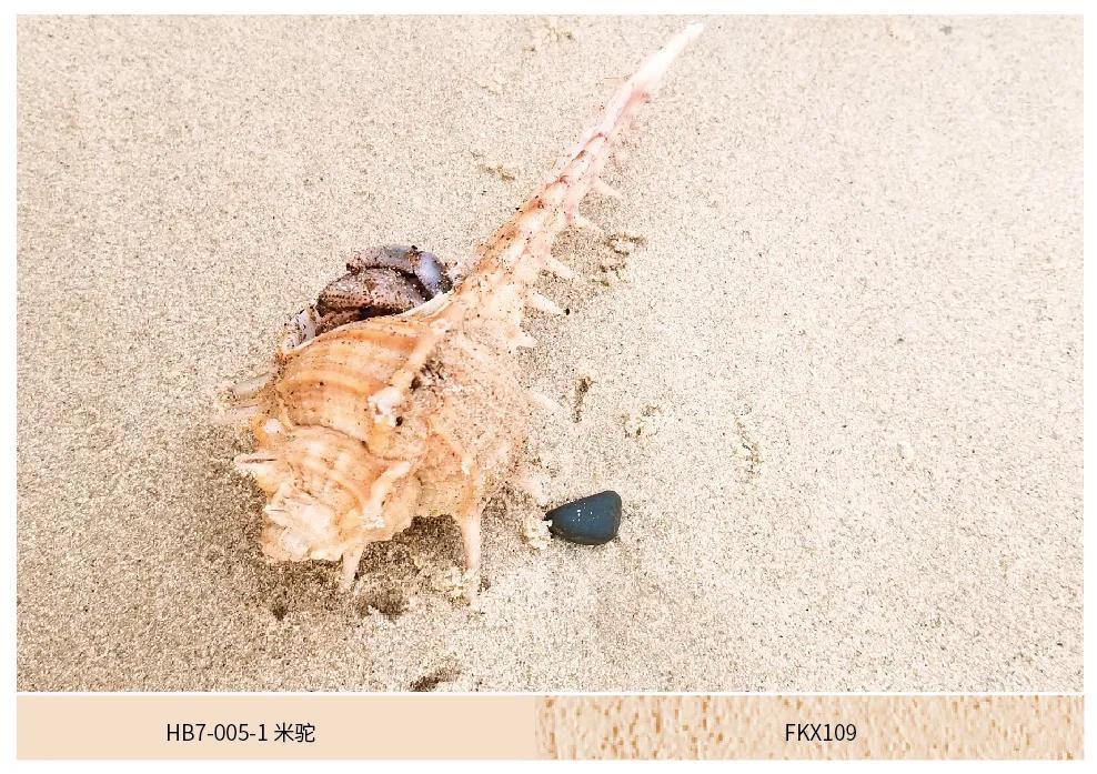 大津硅藻泥